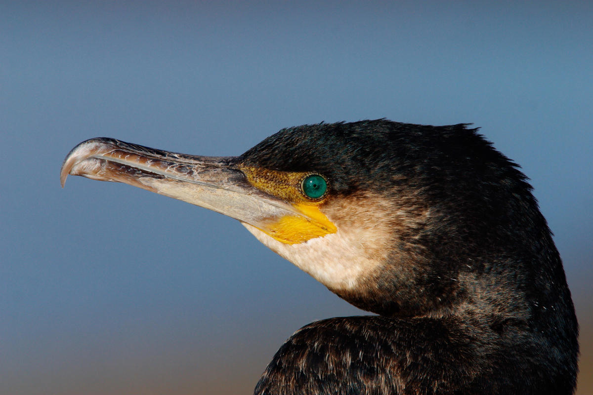 Top 20 Awesome Birds You've Never Heard Of