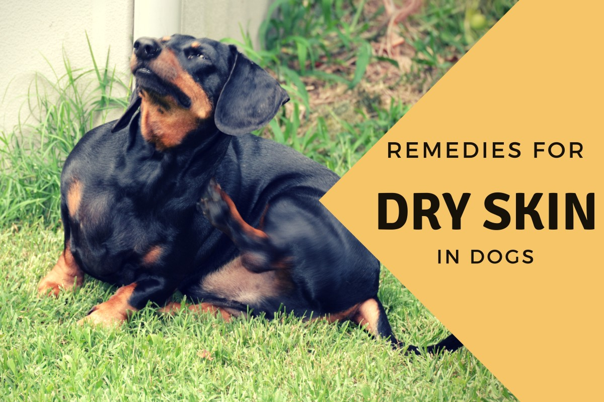 Effective Home Remedies for a Dog With Dry Skin