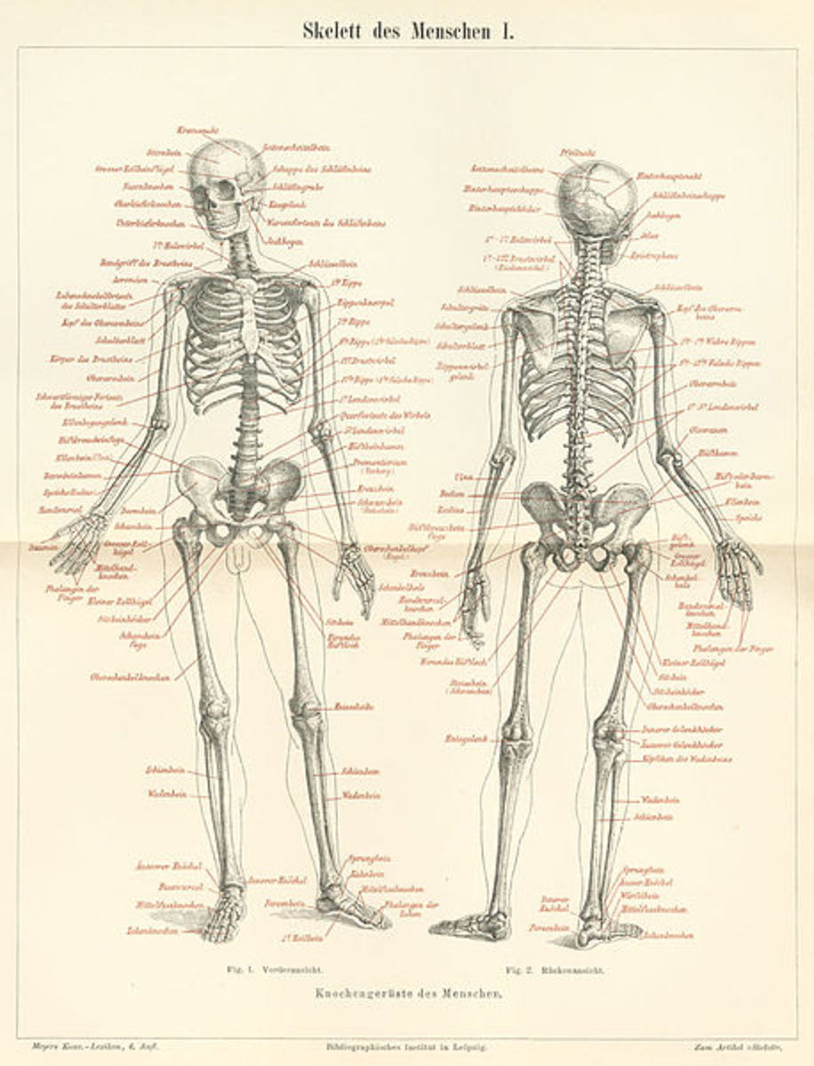 Us as Poems: An Essay on Anatomy and Poetry