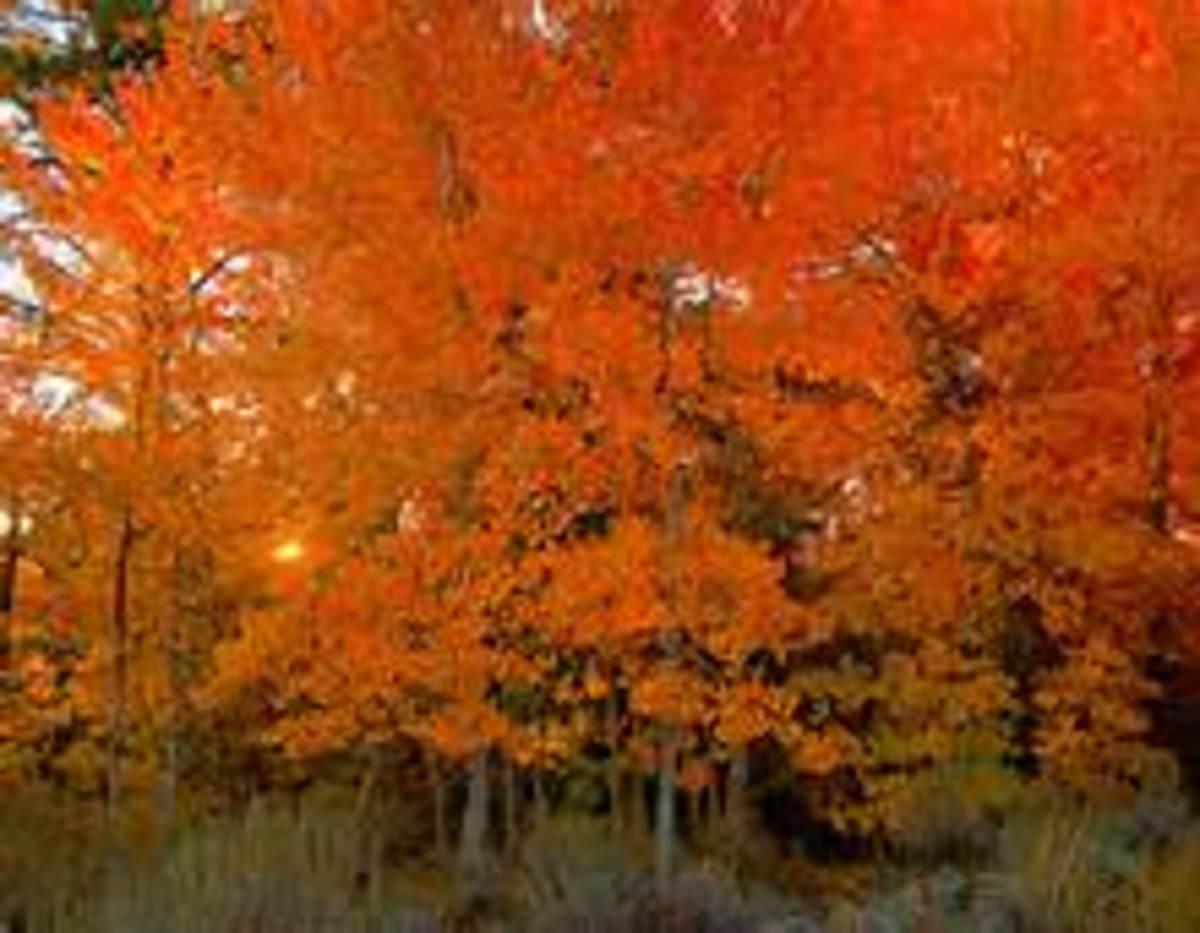 Autumn Limericks