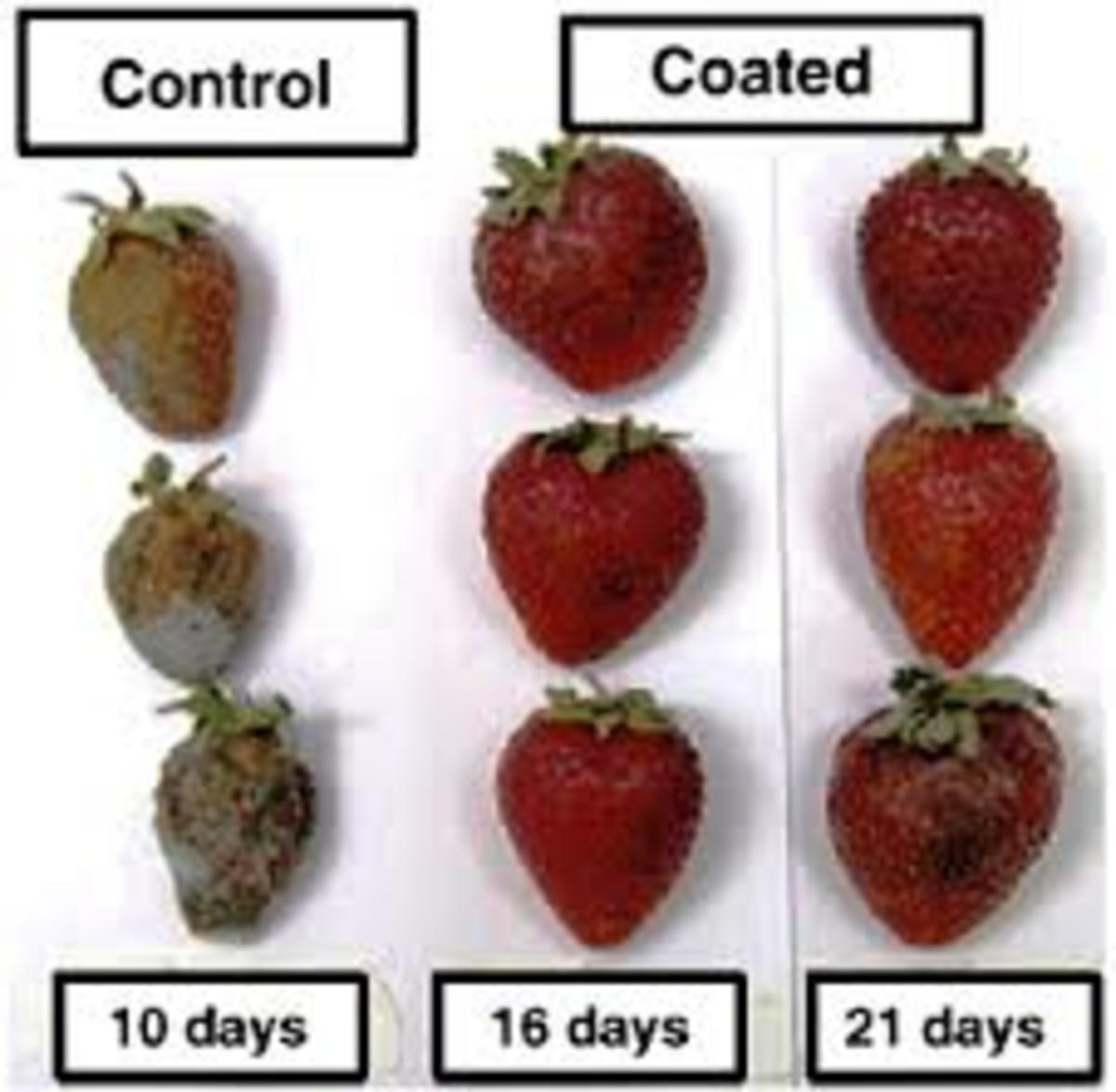 Example of edible coating on strawberries which improves their shelf life