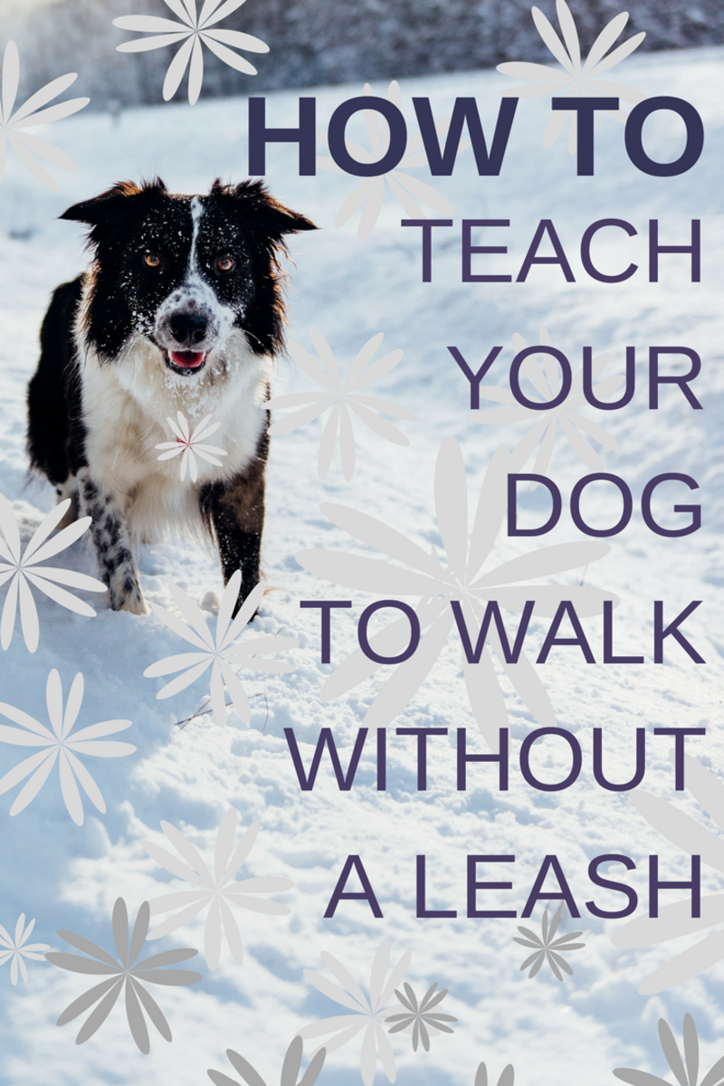 How to Train Your Dog to Walk Without a Leash in 3 Easy Steps