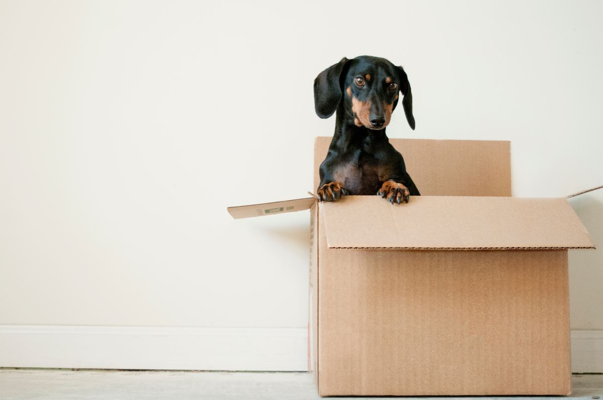 Dog food delivery right to your door, but be aware of shipping costs!