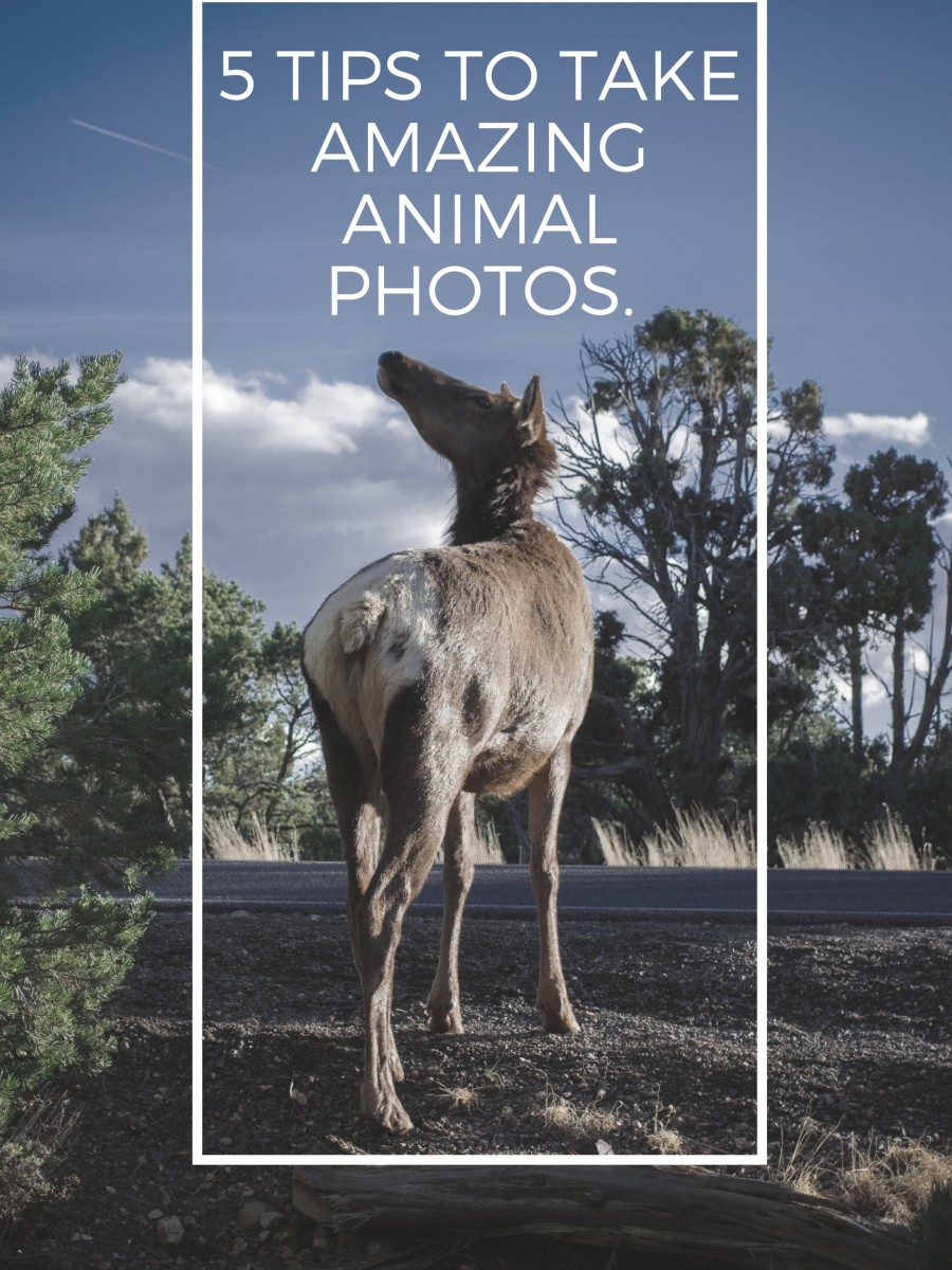 5 Tips to Take Amazing Animal Photos