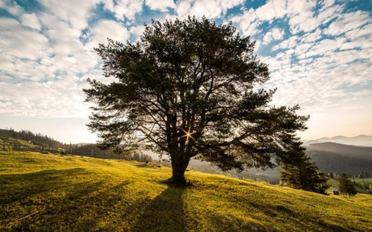 a-great-old-oak-tree