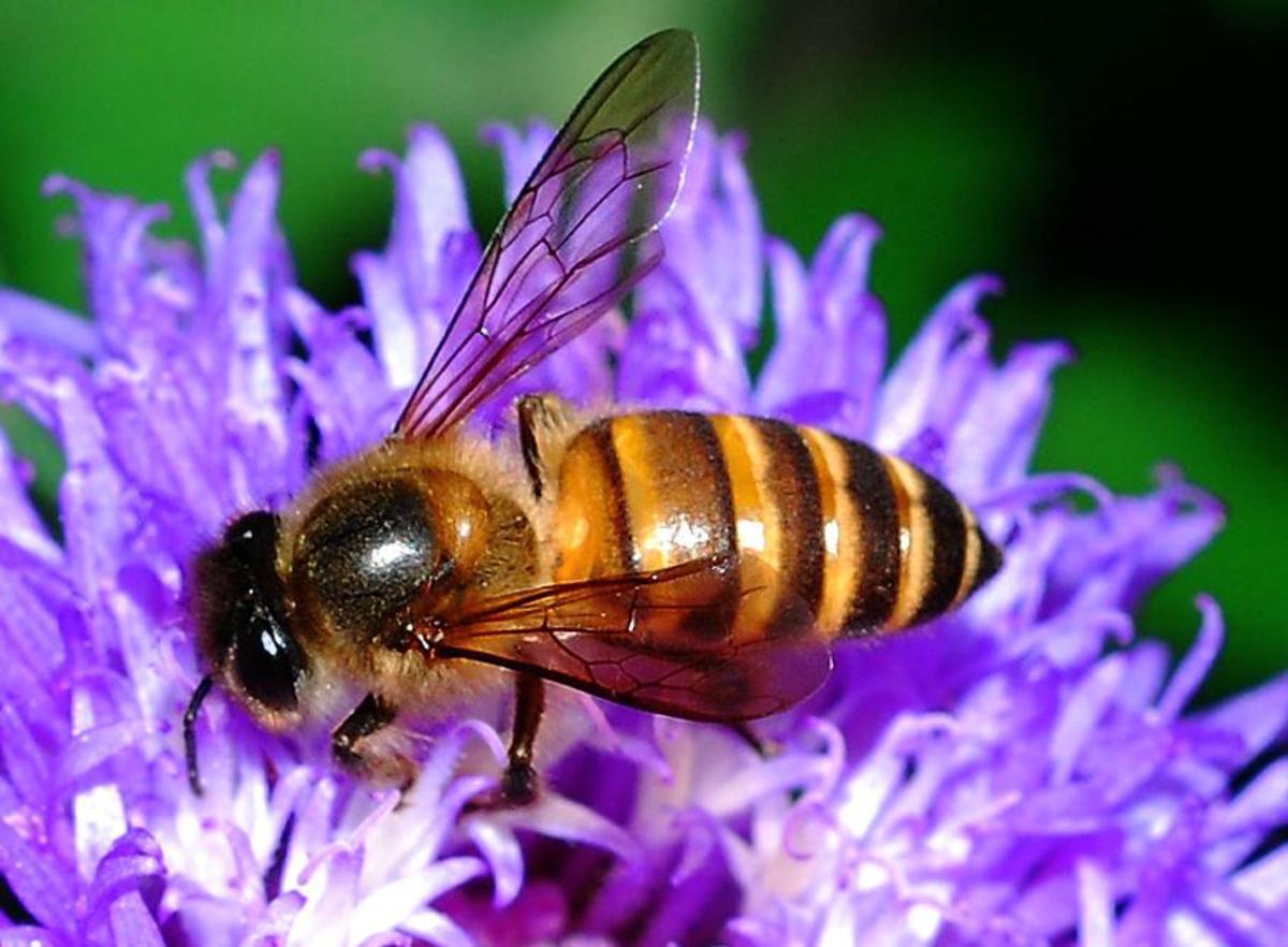 Bees /& Flowers