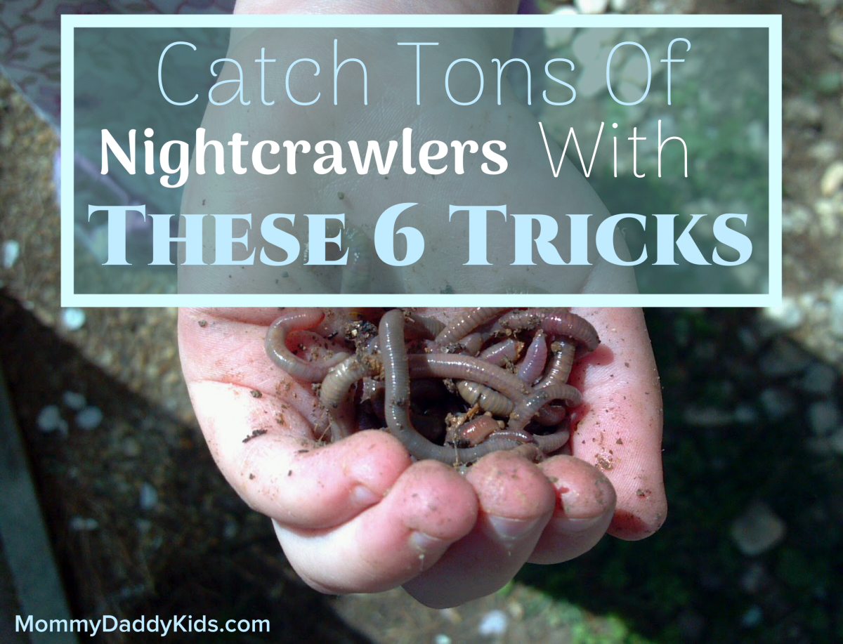Catching Worms: 6 Guaranteed Ways to Make Nightcrawlers Come Out of the Ground