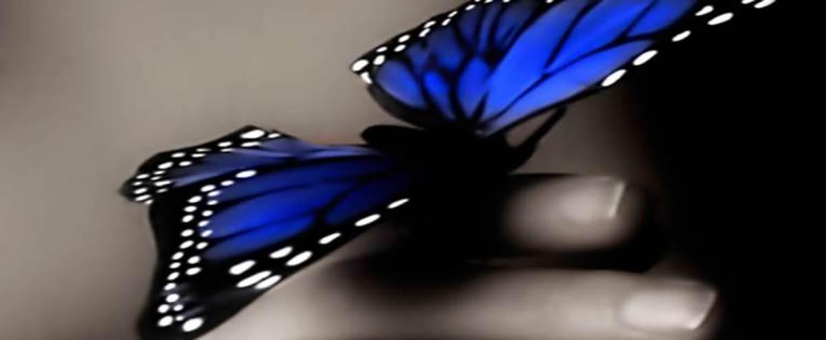 Butterfly on My Fingertip