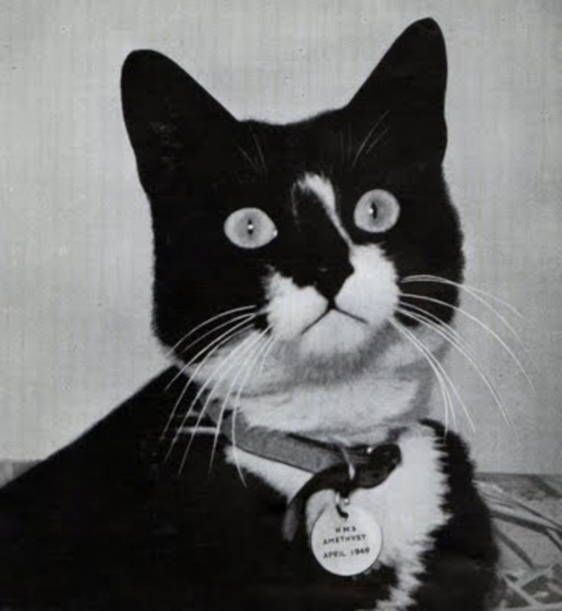 Unsinkable Sam: The Cat That Always Came Back