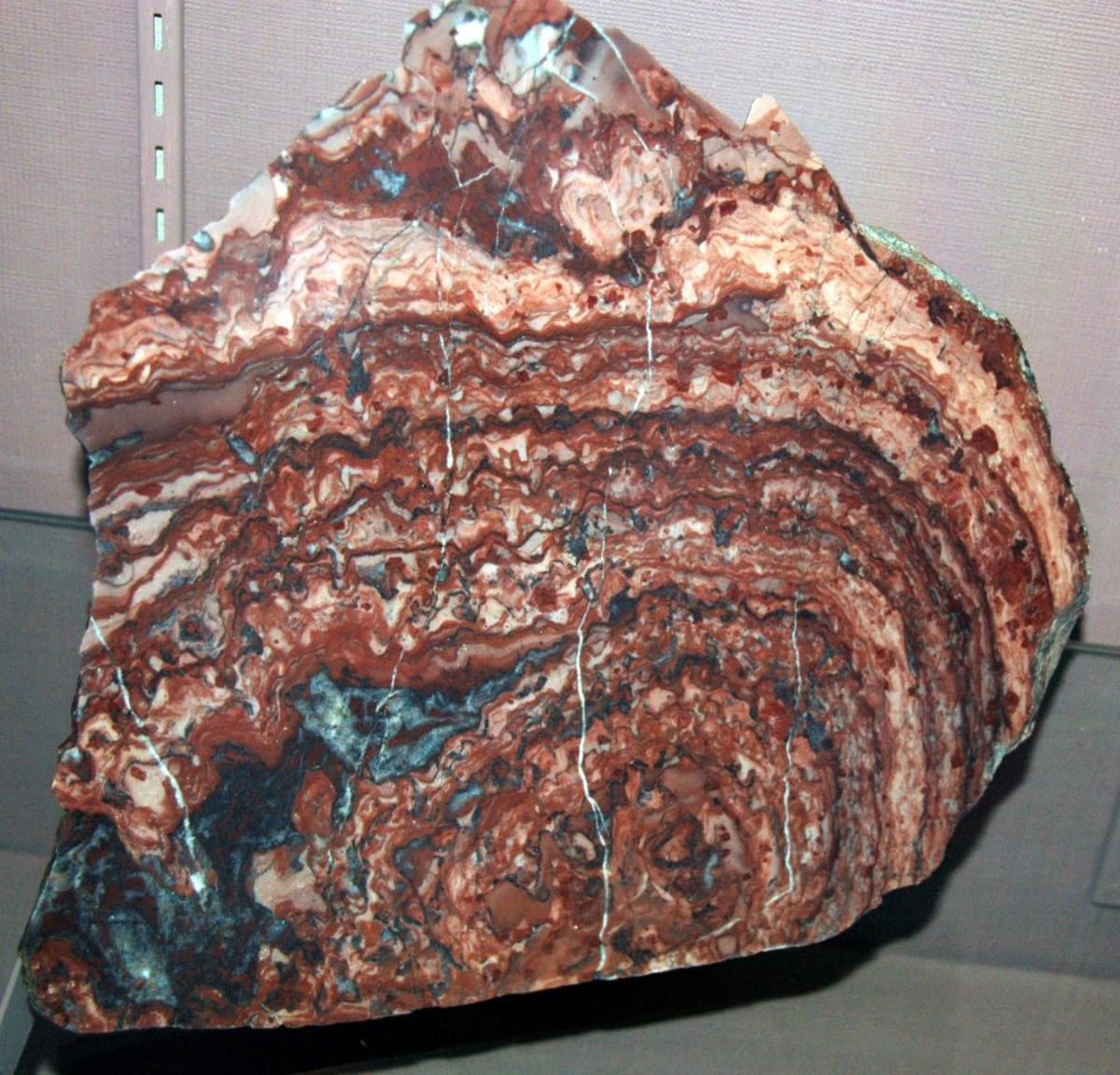 Stromatolite is formed of fossillised algae.