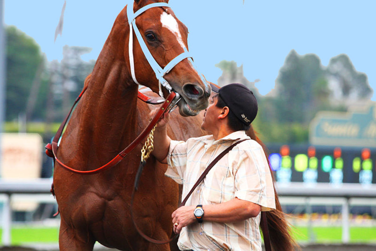 Are Thoroughbred Racehorses Being