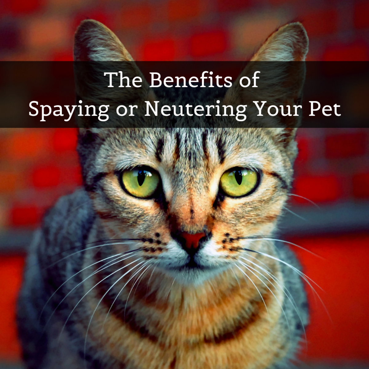 Learn why spaying or neutering a dog or cat benefits the animal, the owner, and society at large.