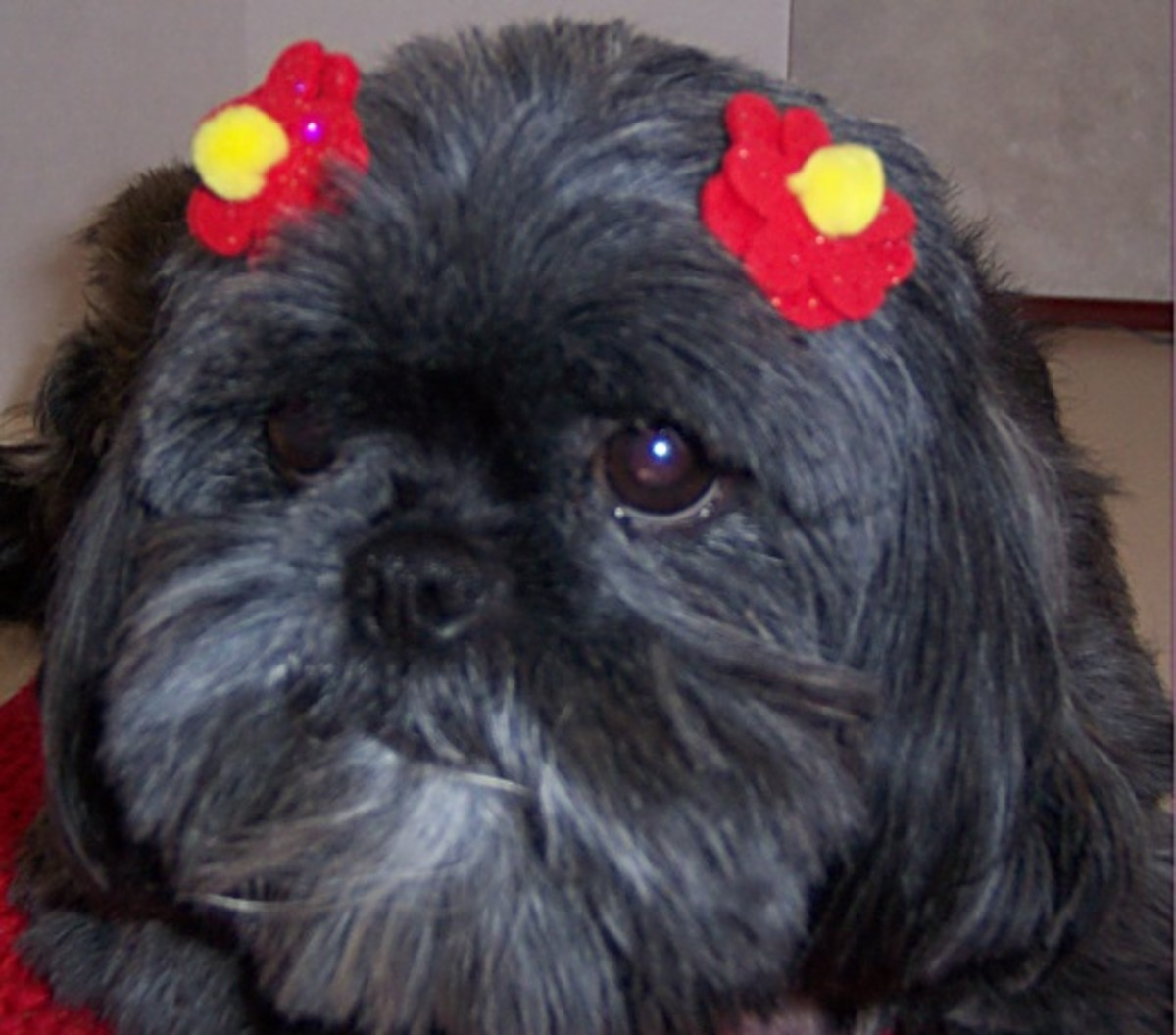 Make a Simple and Inexpensive Pet or Doll Bow in 20 Minutes