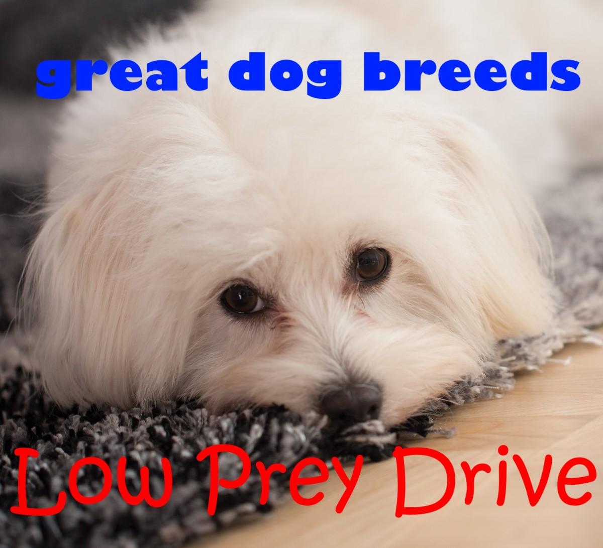 """MALTESE Street Sign dog lover pup pet owner Indoor//Outdoor 18/"""" Wide"""