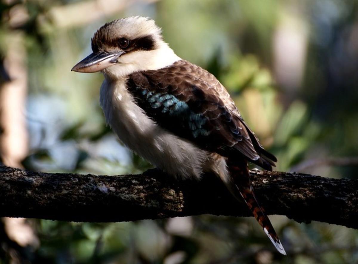Short Story - Bird Call