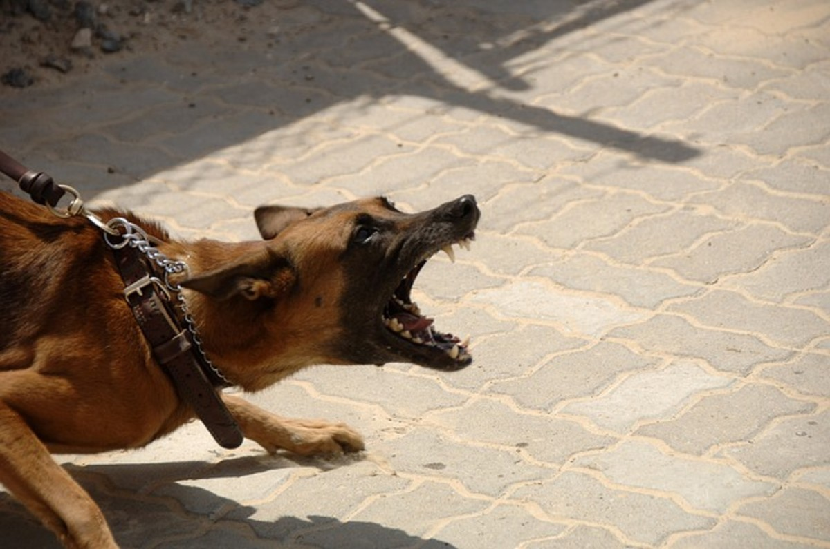 How to Stop Dog Aggression With Training