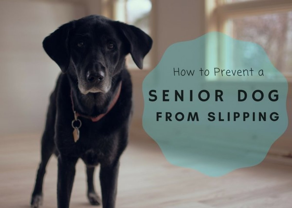 Help your senior dog to navigate around the house without slipping with these preventatives.