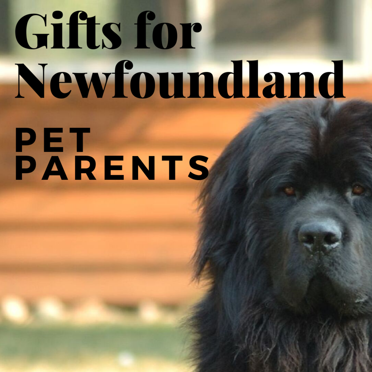 12 Terrific Gifts for Newfoundland Dog Lovers