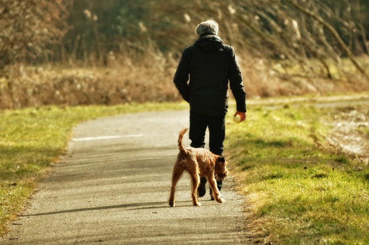 Freedom Through Off-Leash Dog Training