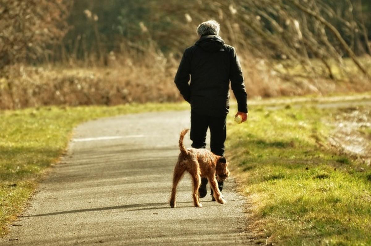 Freedom Through Off-Leash Dog Training