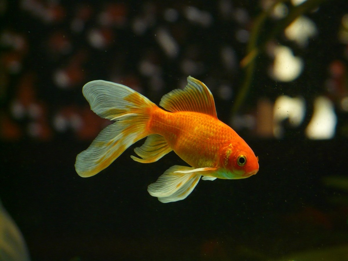 The Best Aquatic Plants for Goldfish