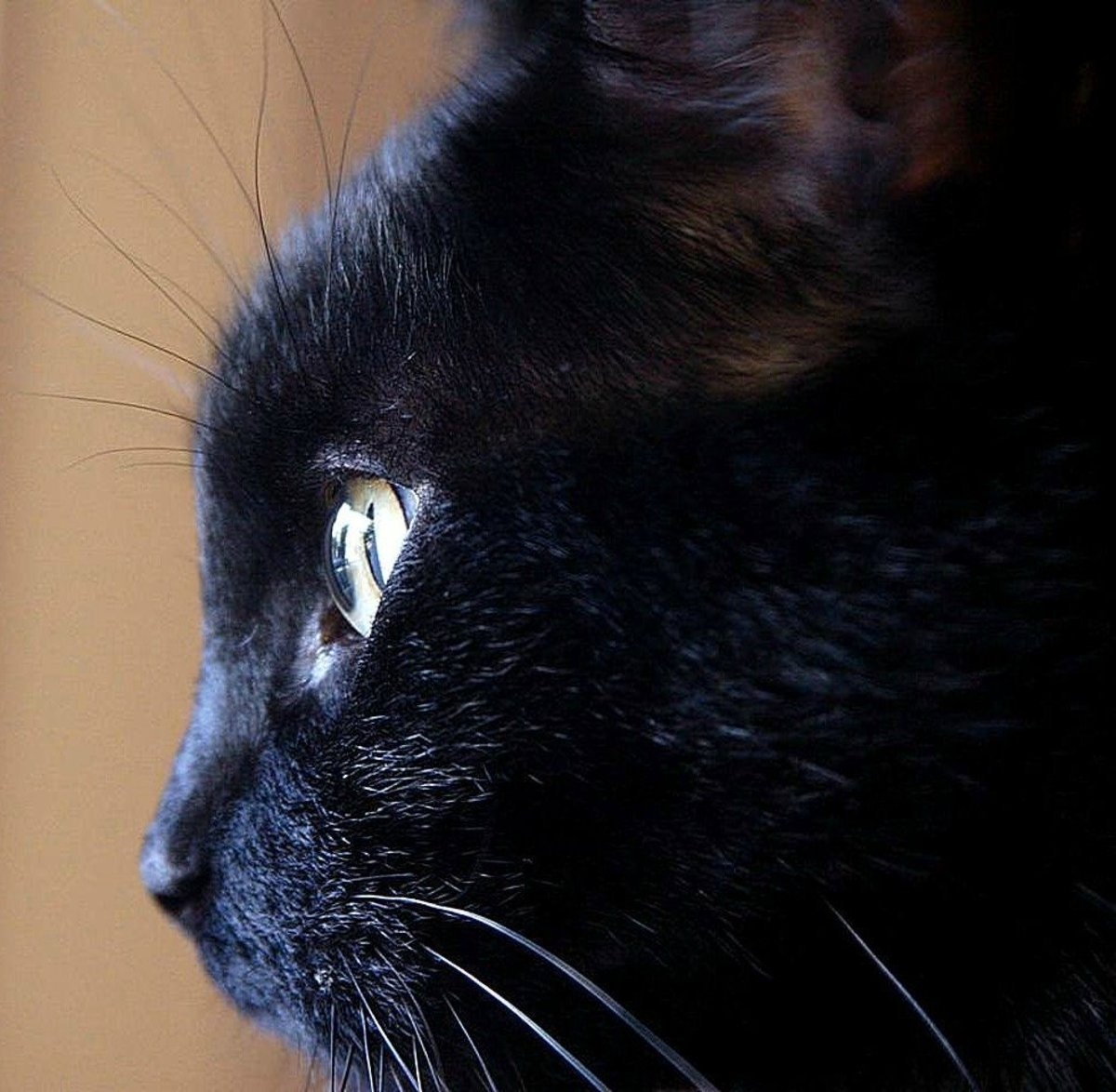 Cats are quintessential witches' familiars.