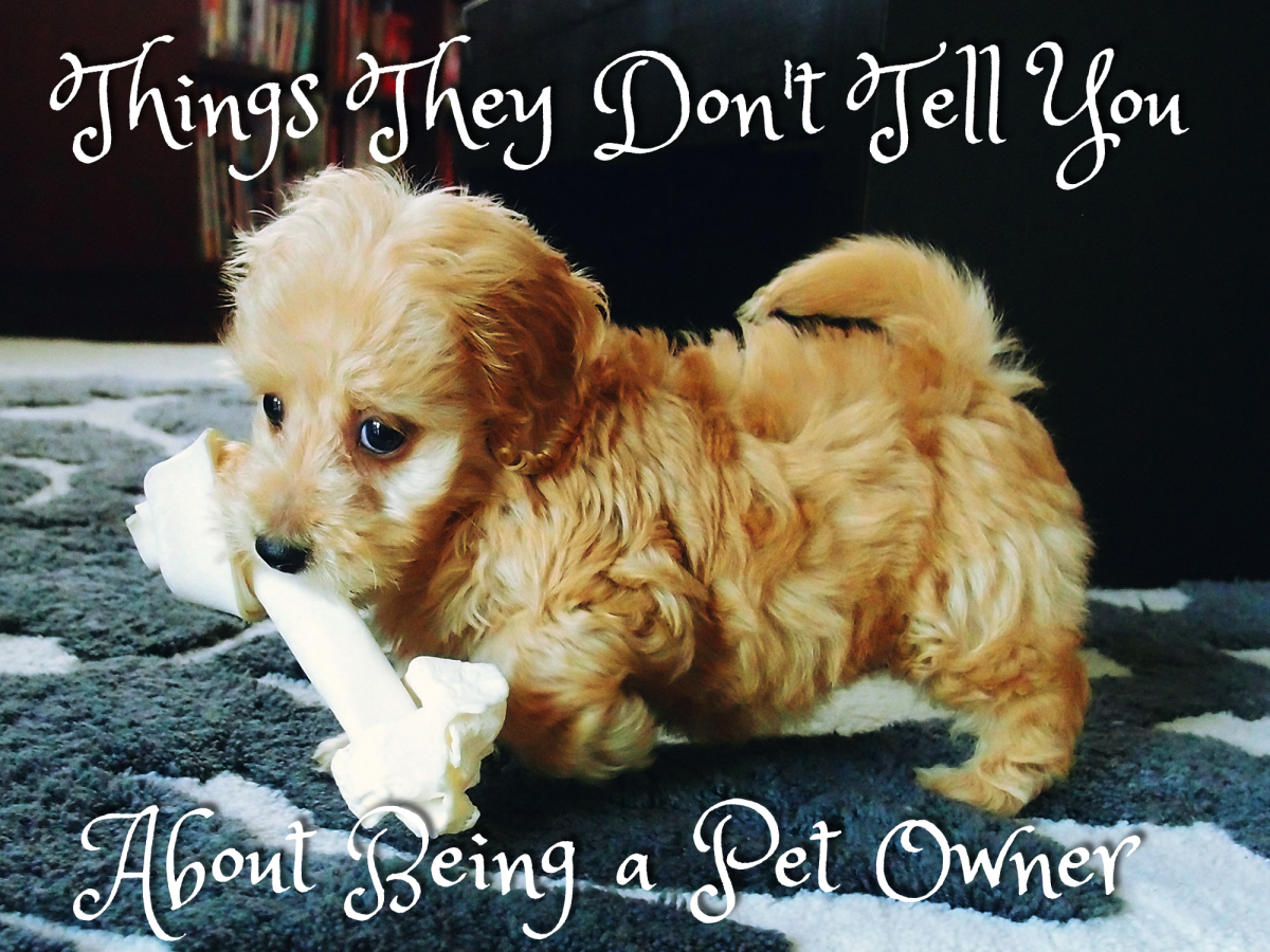 Gross Things They Don't Tell You About Being a Pet Owner