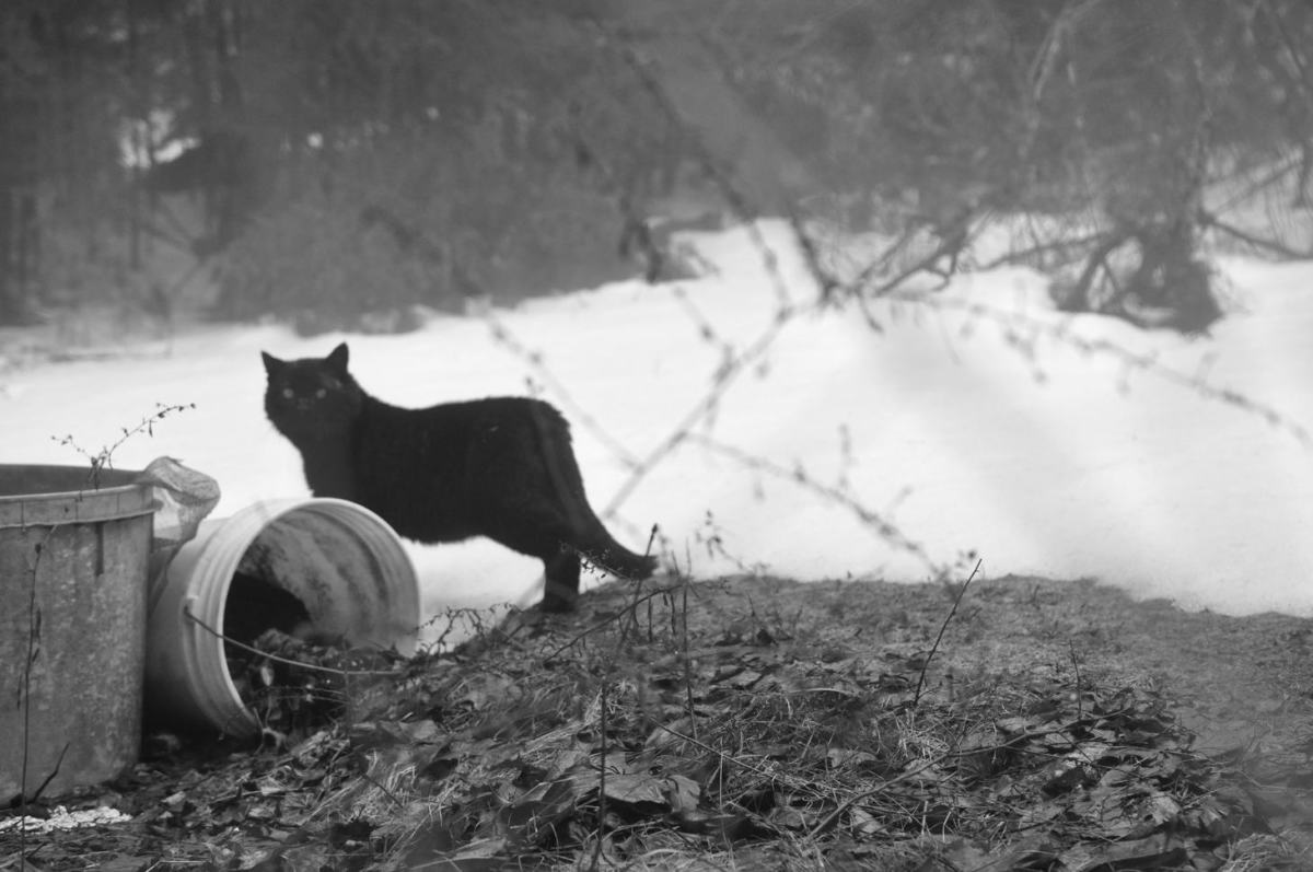 People aren't the only ones society throws out - as this feral tom proves.