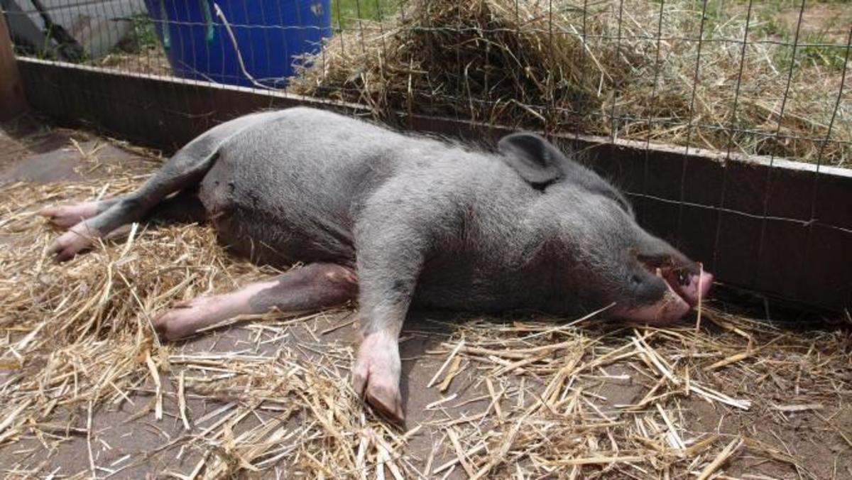 Sweet summer slumber! This potbelly knows how to do it!