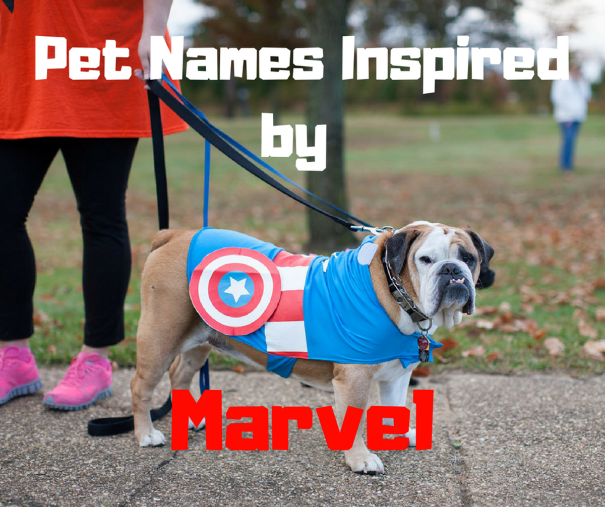 Marvel Names for Dogs and Cats: Superhero and Villain Pet Names