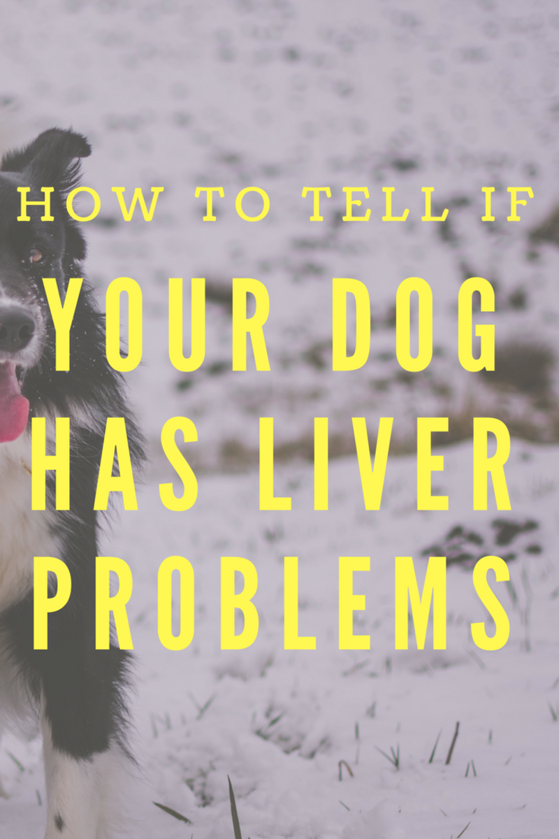 How Can You Tell If Your Dog Has Liver Problems?