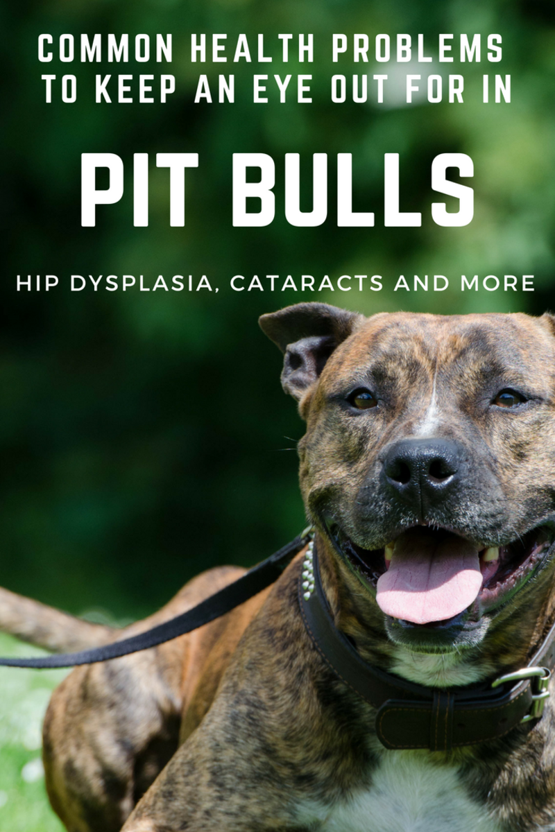 Health Problems to Watch out for in Pit Bulls