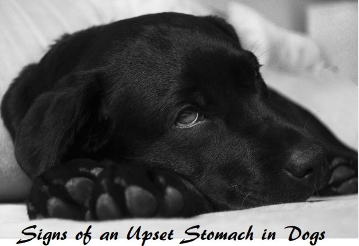 15 Signs of an Upset Stomach in Dogs