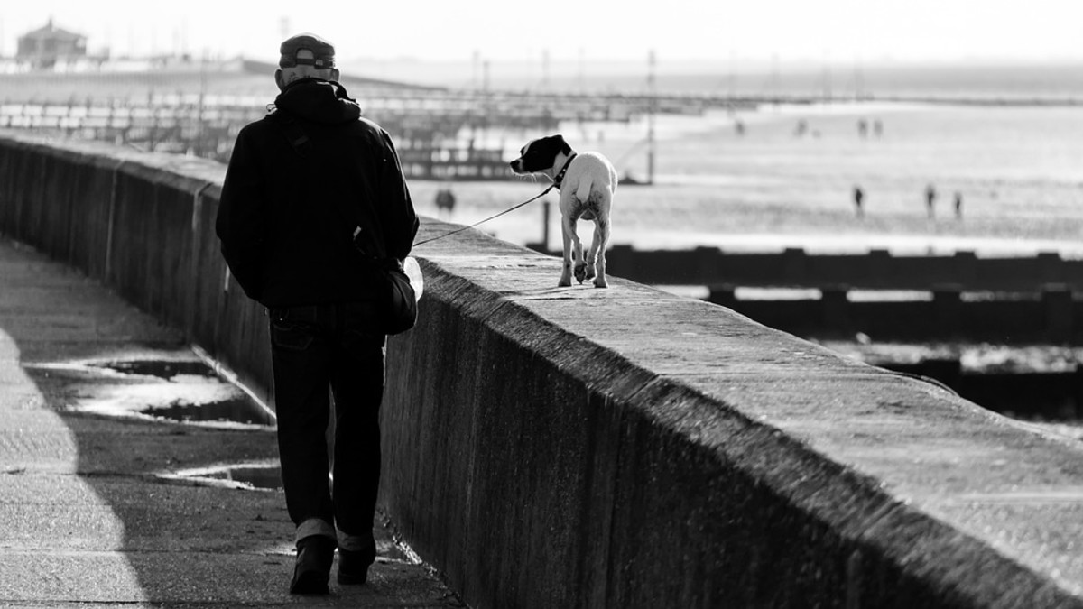 The Best Safety Tips for Walking Your Dog
