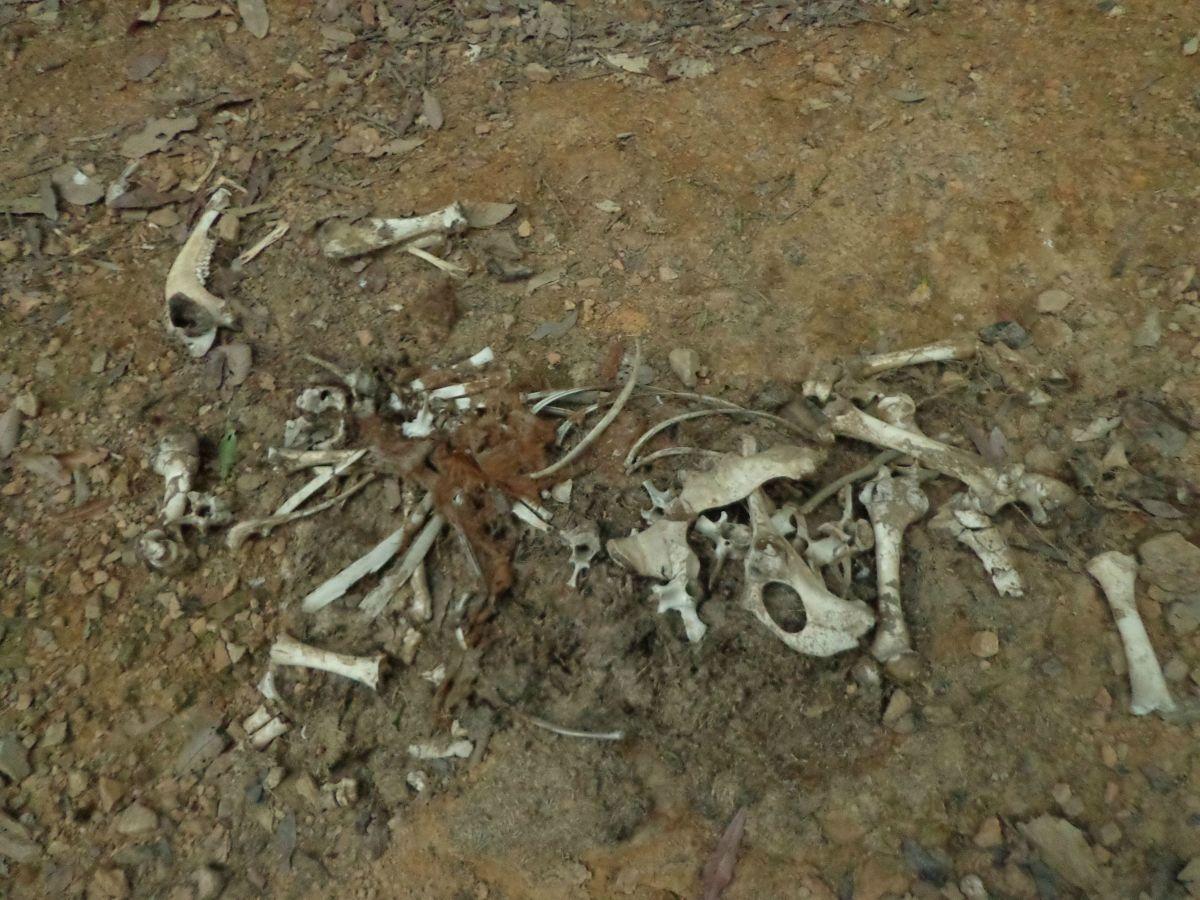 Palentologists Were We