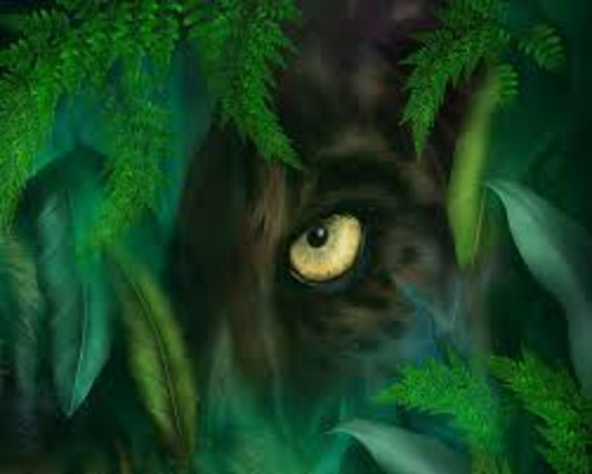 Eyes of the Jungle: Fantasy Novel