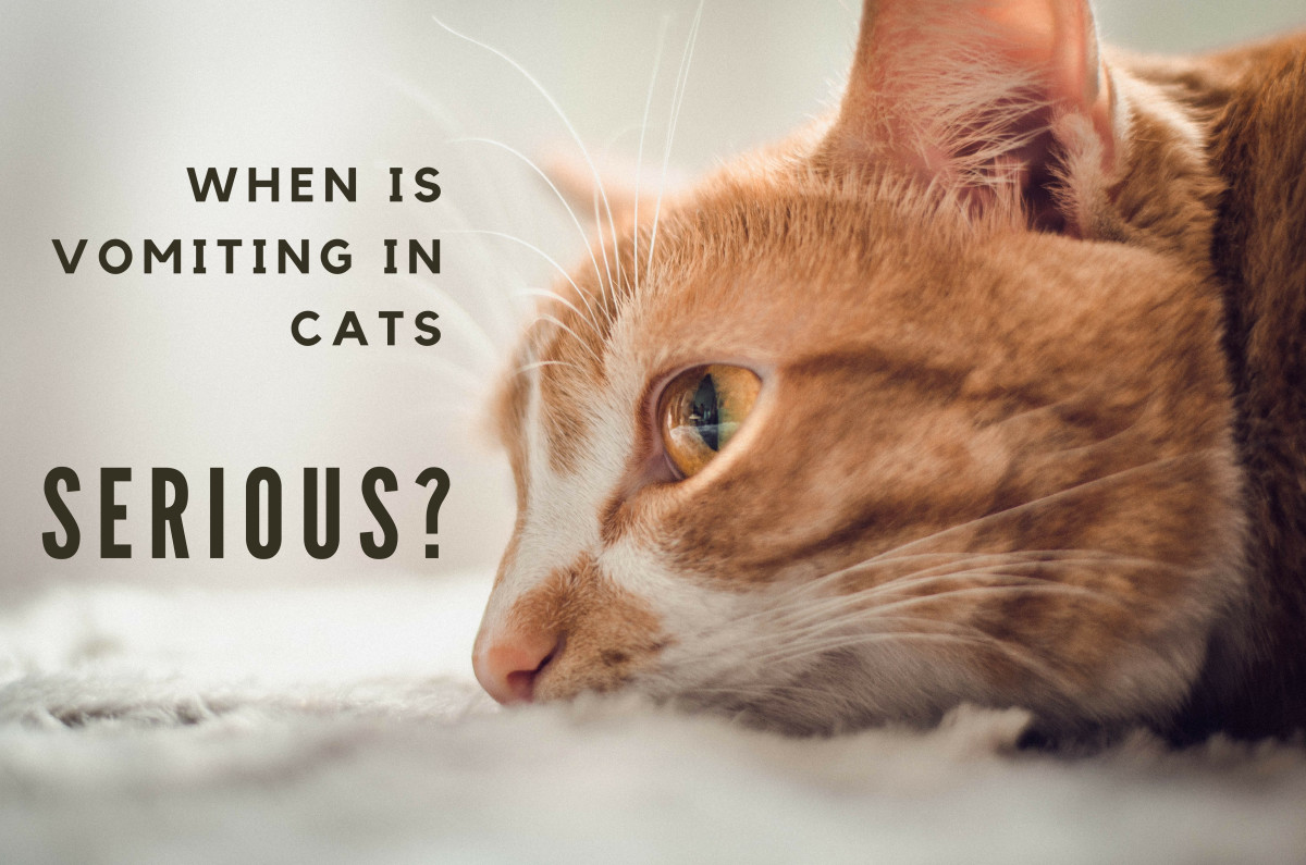 Various conditions may cause your cat to vomit. Know when to seek emergency veterinary care.
