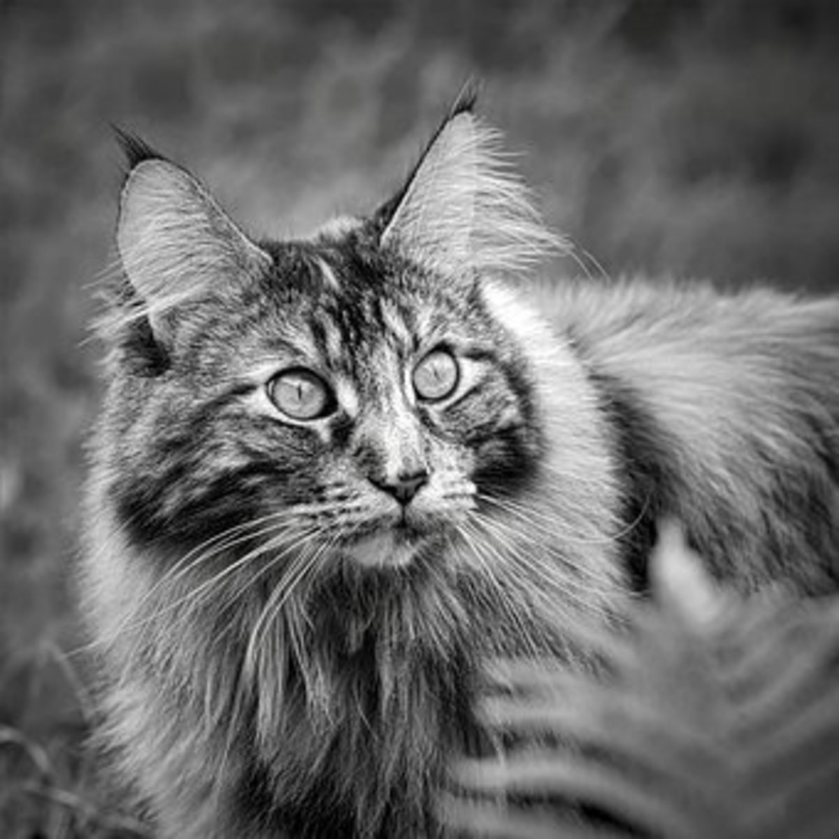 15 Astronomical Names for Maine Coon Cats