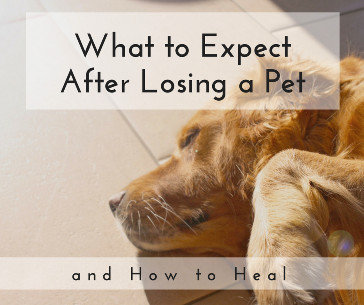 Understanding the five stages of grief is an important part in healing from the loss of a pet.