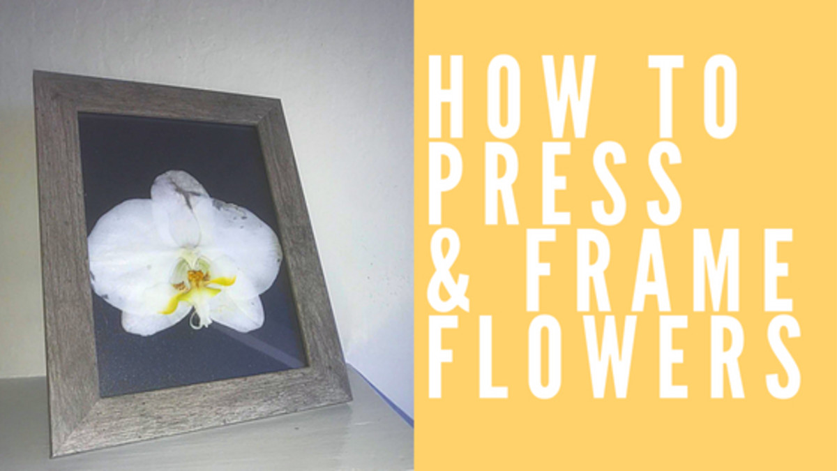 How to Press and Frame Flowers