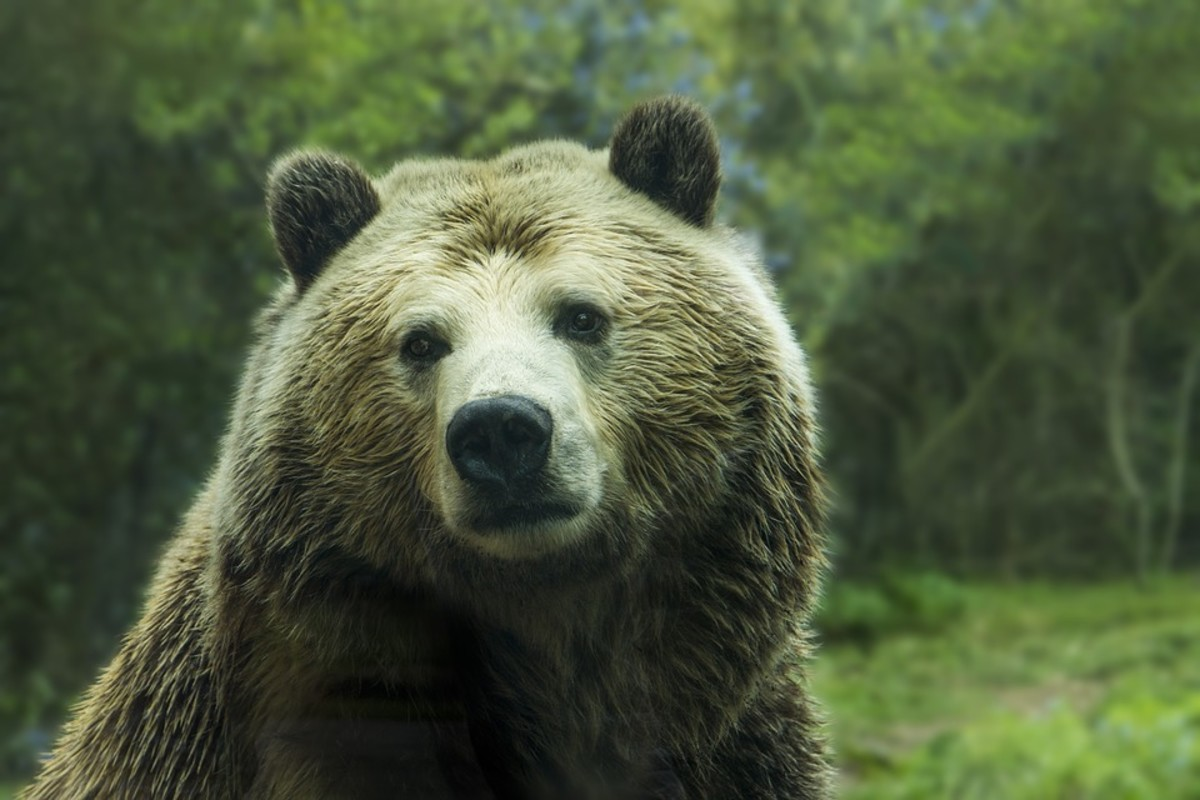 Hiking? Easy Ways to Defend Yourself Against Bears and Snakes