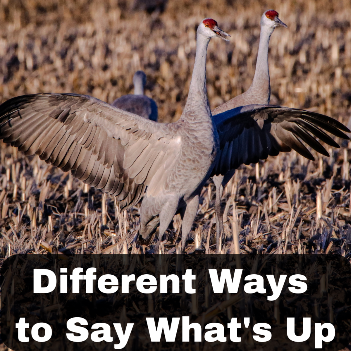 """Alternative Ways to Ask """"How Are You?"""" or """"What's Up?"""""""