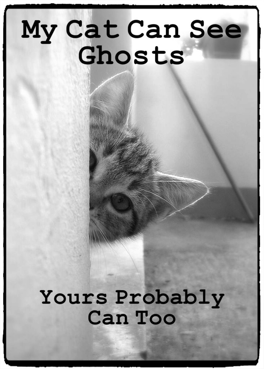 Have you ever felt like your pets could see things you couldn't? It's possible that they were sensing ghosts.