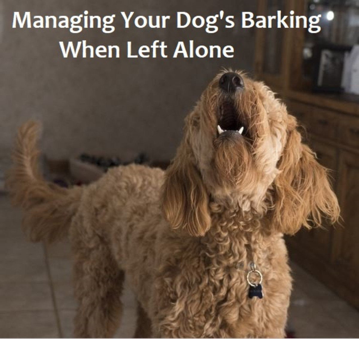 How to Deal With Dogs That Bark When Left Alone