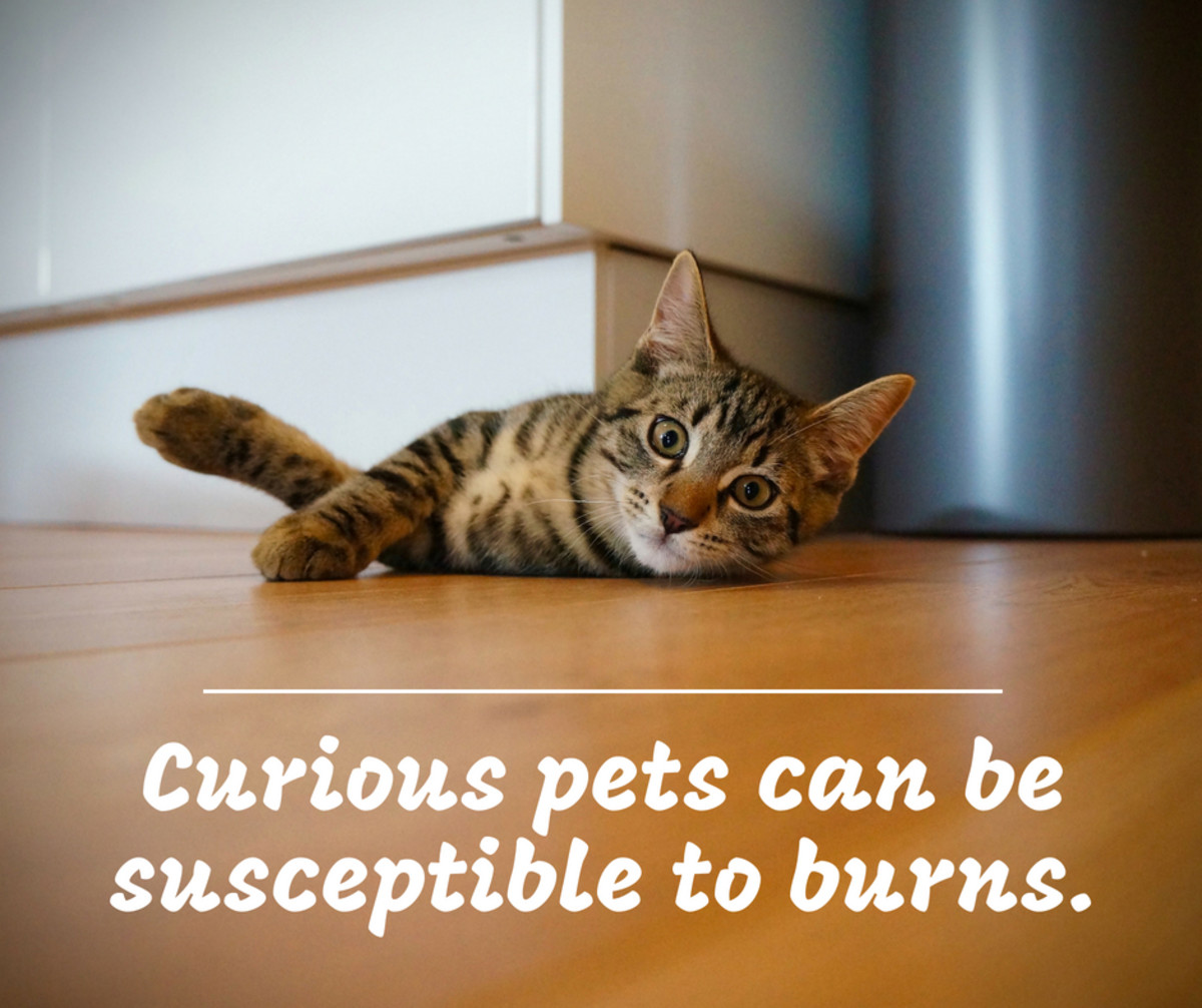 Curiosity killed the cat? Because of their agility and inquisitive nature, pets are more likely to injure themselves accidentally.