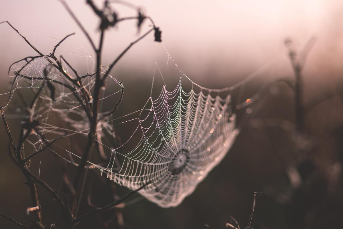 Spider Silk at Dawn