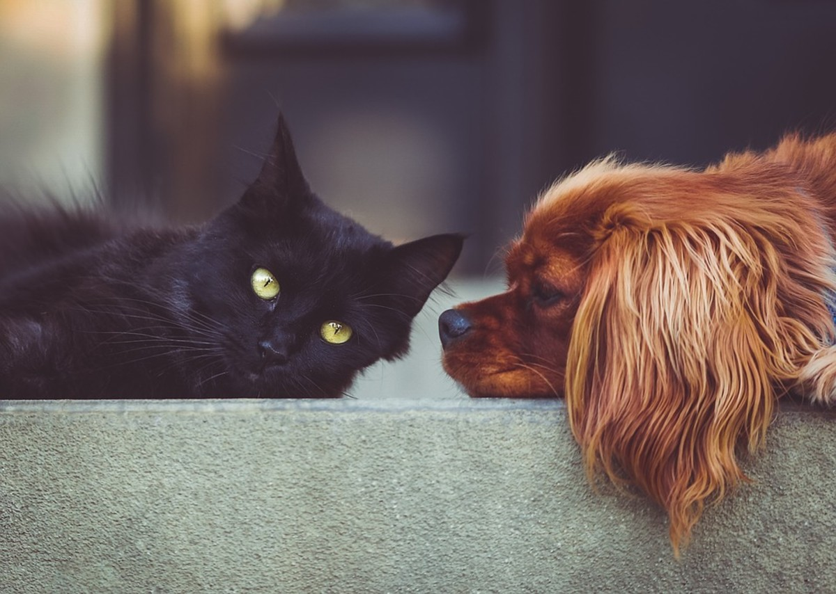 Cats and dogs have been shown to reduce the blood pressure of their owners. Owning a pet is a great way to reduce stress.