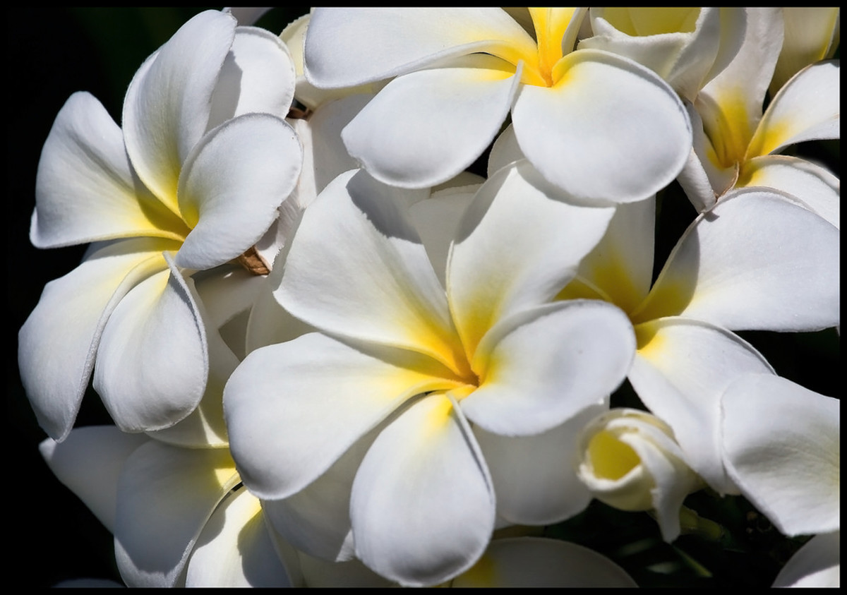 White helps to dispel negative energy from the body.