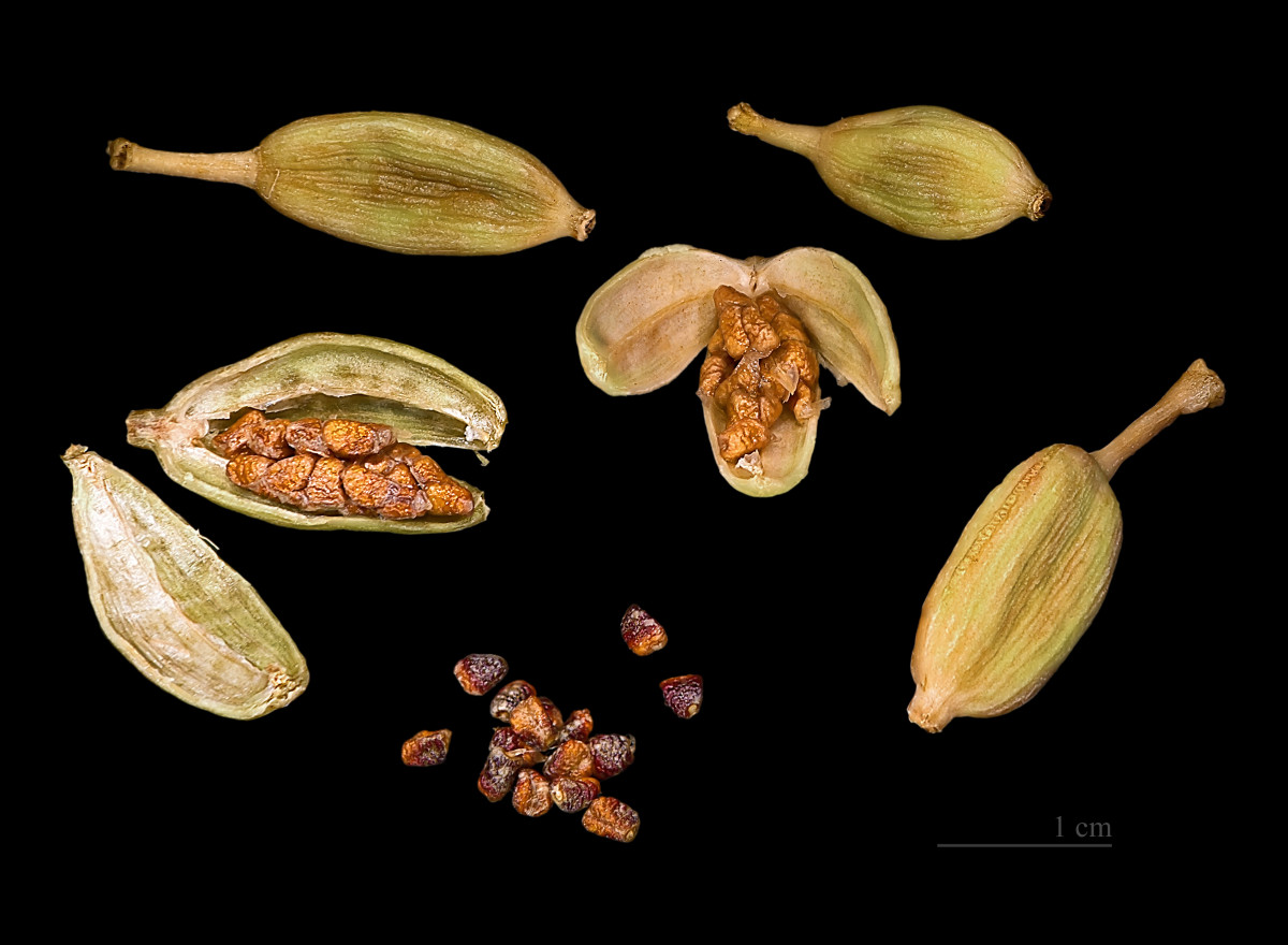 Cardamon Seeds and Capsules