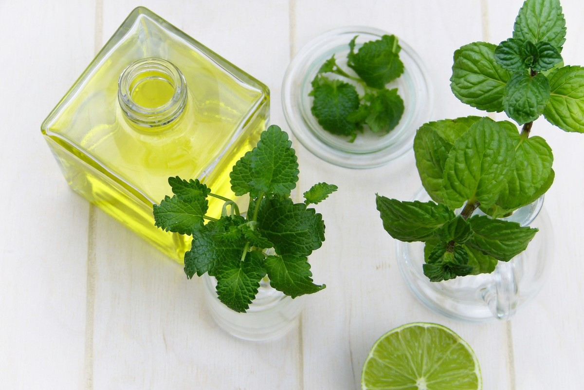 Harvesting healthy, high-quality leaves is the most important aspect of making your own peppermint essential oil.